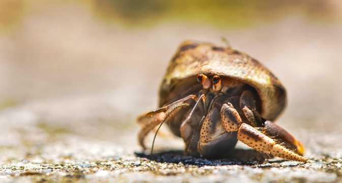 沙滩上的寄居蟹图片