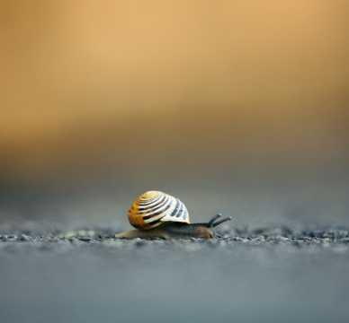 在地上爬行的白唇蜗牛