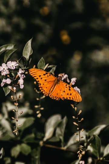美丽的黄色蝴蝶图片