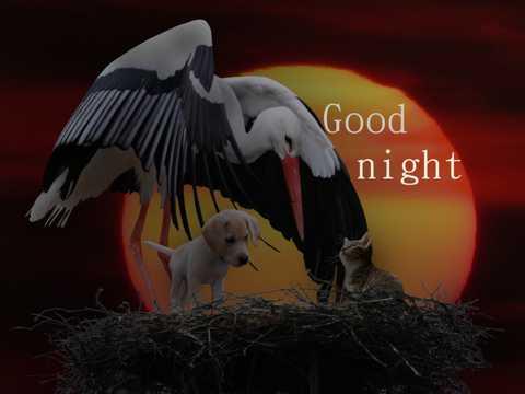可人小动物晚安图片