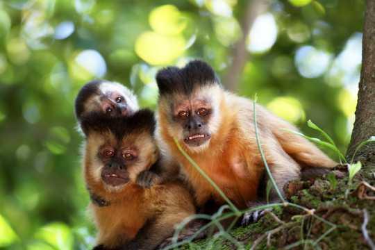 树上可人的小猴子