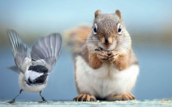 可爱的松鼠和小鸟