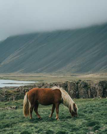 马在草原上吃草图片