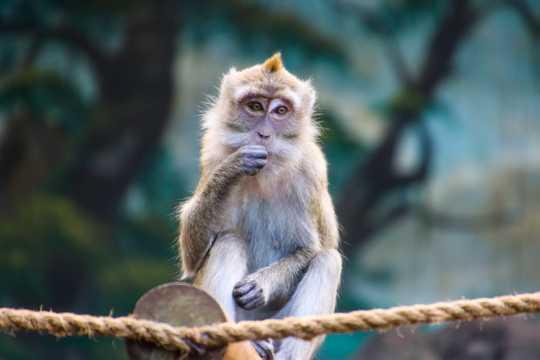野生小猕猴图片