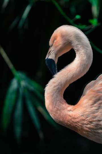 粉色火烈鸟图片下载
