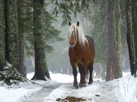 树林野马图片