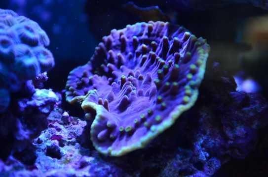 海底软珊瑚图片观赏