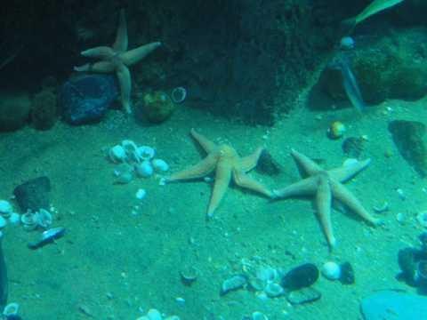 海底的五角海星