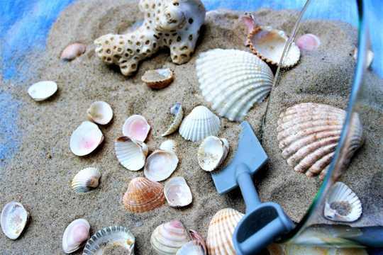 沙滩上的贝壳图片