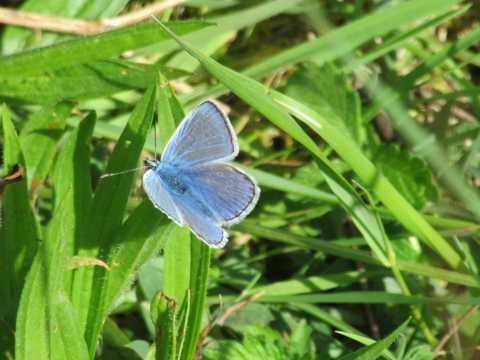蓝色的唯美蝴蝶