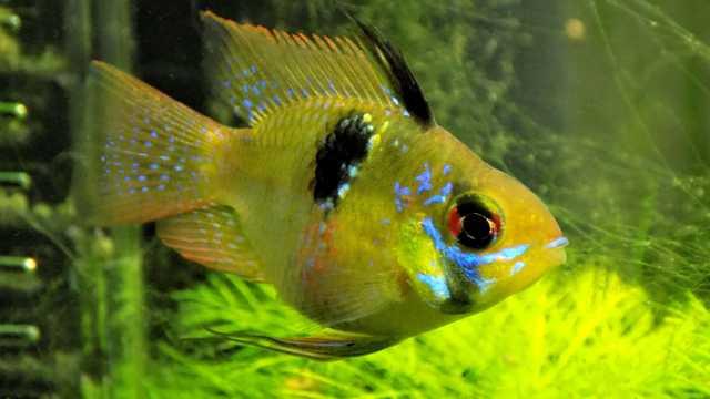 水族馆里美丽的黄色观赏鱼