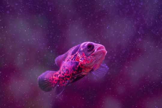 小鱼儿欣赏图片