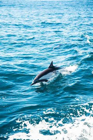 海洋里的可爱海豚