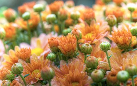 橙色的花朵壁纸