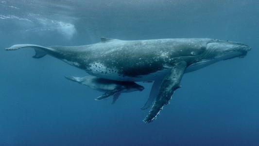 母亲和小鲸鱼壁纸