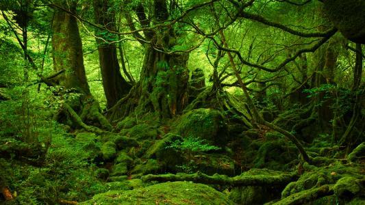 绿色的青苔森林高清壁纸