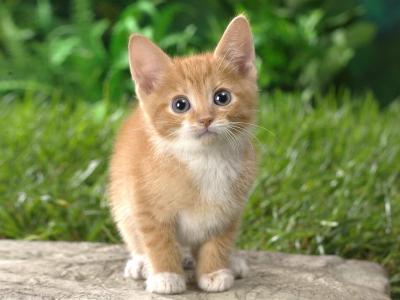 橙色的小猫壁纸