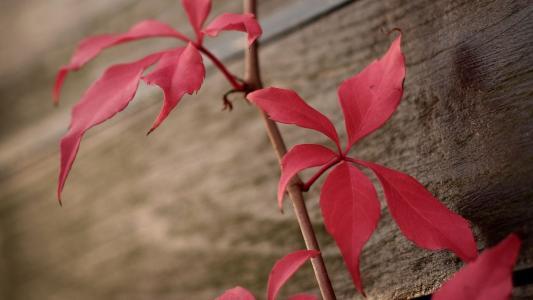 最美秋日红叶