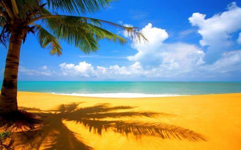 与棕榈墙纸的沙子海滩