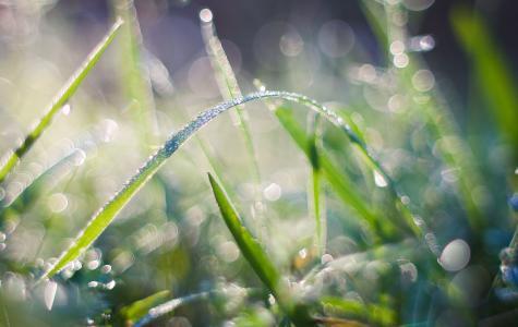 早春时刻养眼绿草