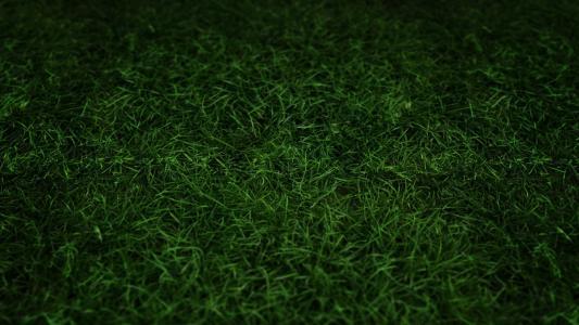 深绿草高清壁纸