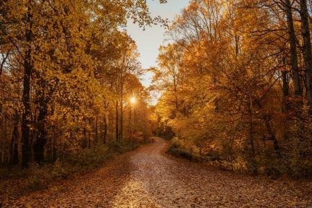 秋季林间小路日出景象