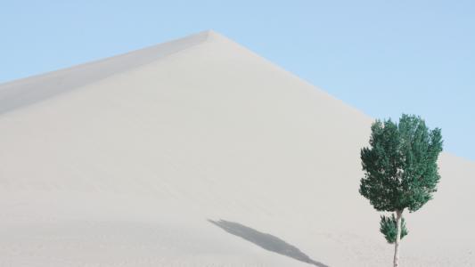 沙漠上的绿树