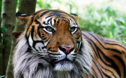 老虎不是好玩的壁纸