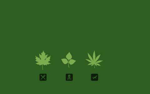 了解你的植物壁纸