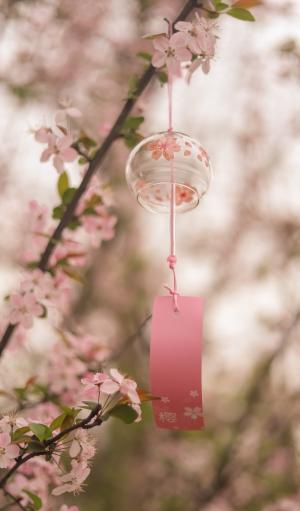樱花树下的风铃