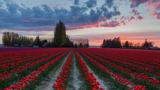 红色的花朵壁纸