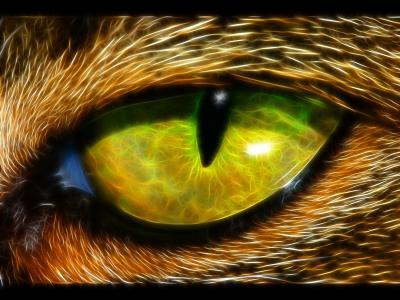 分形动物眼睛壁纸