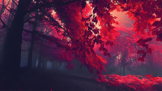 红色森林高清壁纸