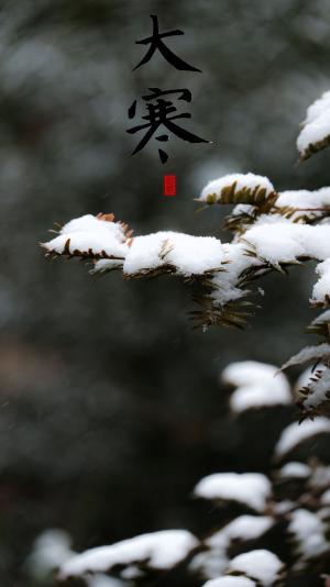 大寒时节雪中植物