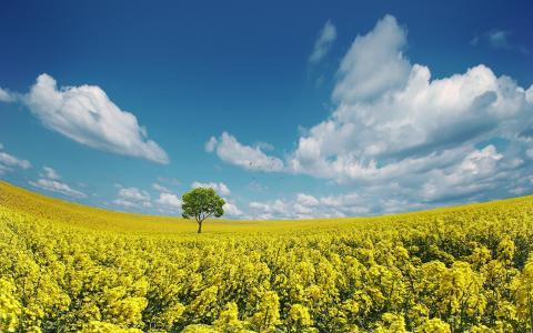 黄色的田野壁纸