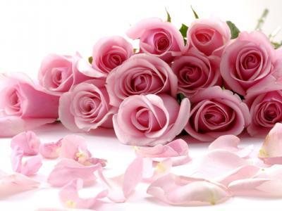 粉嫩的玫瑰花