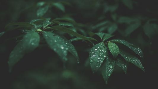 湿的叶子高清壁纸