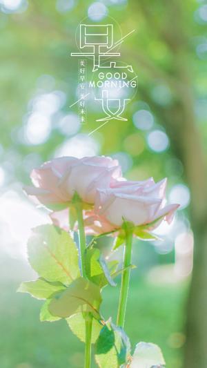 早安清晨迷人花朵