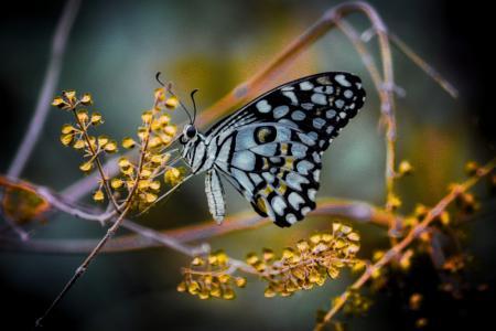 斑斓多彩的蝴蝶