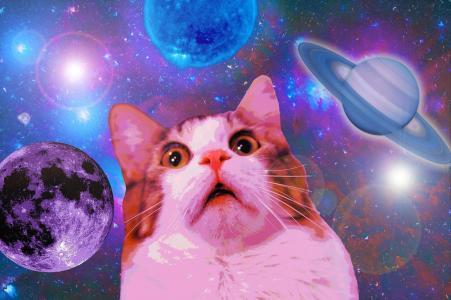 有趣的太空猫壁纸