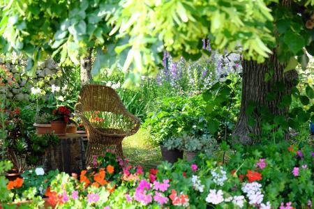 清新美丽的小花园
