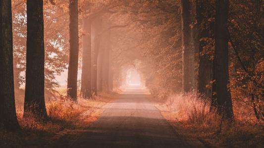 晨间小路美景