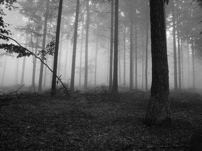 在森林壁纸雾