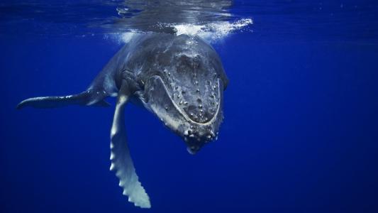 鲸鱼高清壁纸