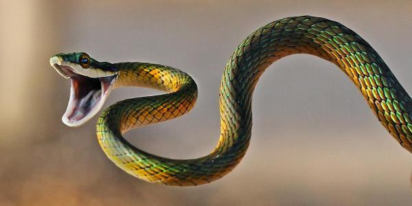 愤怒的蛇壁纸