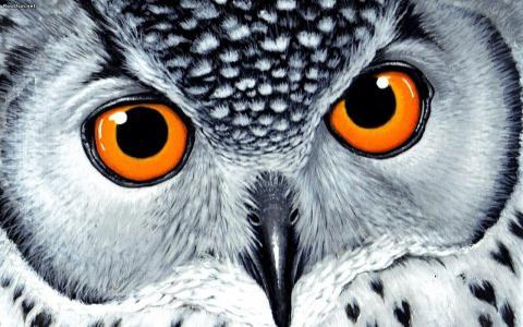 与大橙色眼睛墙纸的猫头鹰