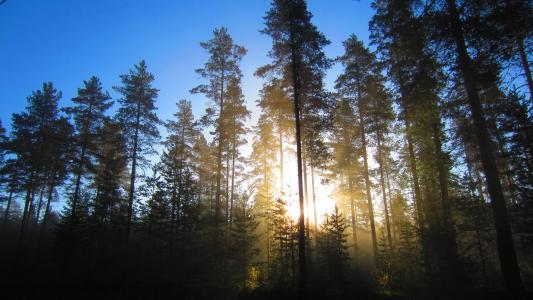 森林阳光壁纸