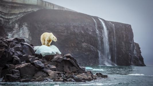 北极熊高清壁纸