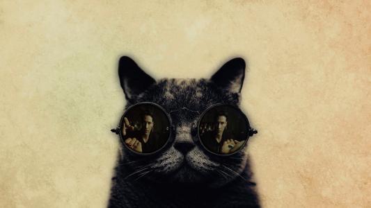 有趣的猫,大眼镜高清壁纸