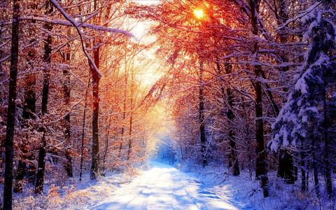 森林雪壁纸